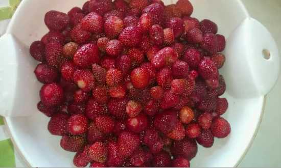чистим ягоду