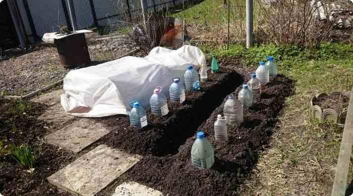 накрываем пластиковыми бутылками