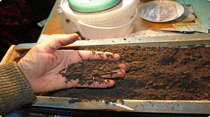 почва для рассады синеньких