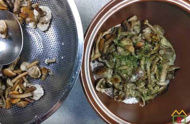 складываем грибы в посуду для соления