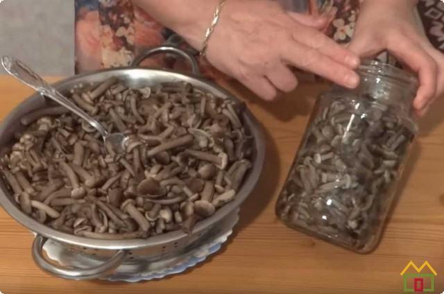 В стерильные банки закладываем процеженные грибы